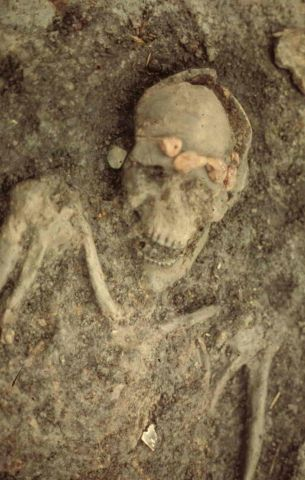 Six thousand years ago, Swifterbant people inhabited the area that we now know as Flevoland. The picture shows the so-called head man of Swifterbant. The skeleton is wearing a headdress made of amber beads