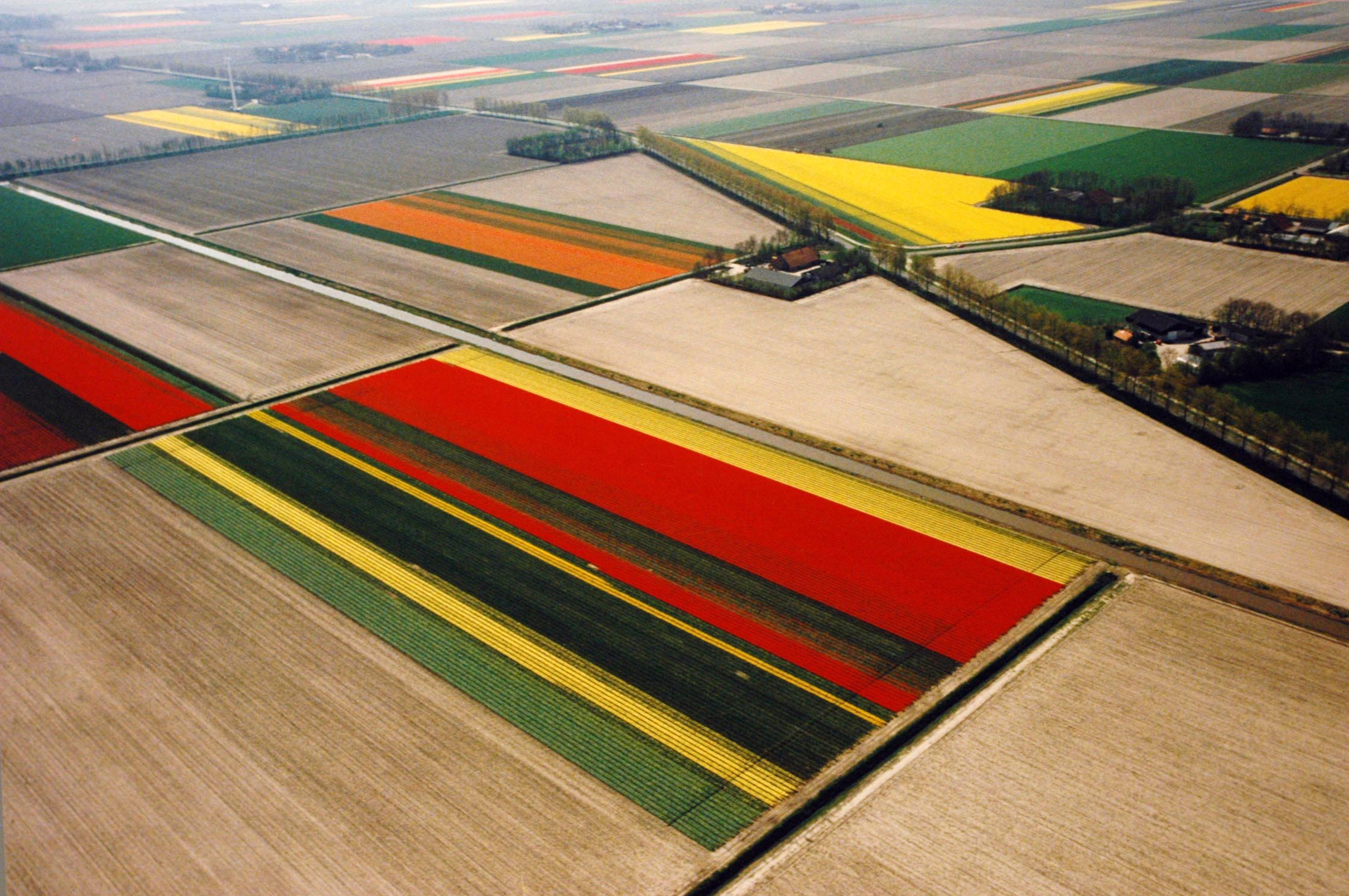 The straight plots in the design of the Noordoostpolder and the later cultivation of flower bulbs give the landscape a Mondriaan-like appearance from the air.