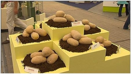 Emmeloord has to become the potato capital of the world.