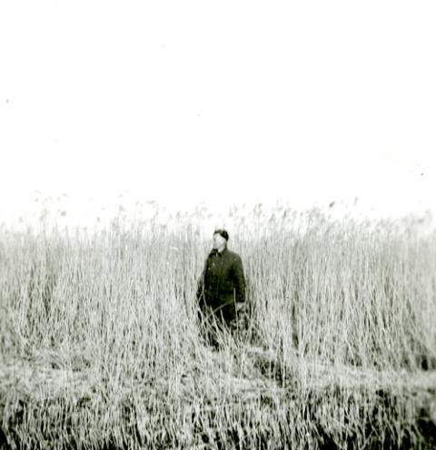 Man-sized reeds in the Noordoostpolder